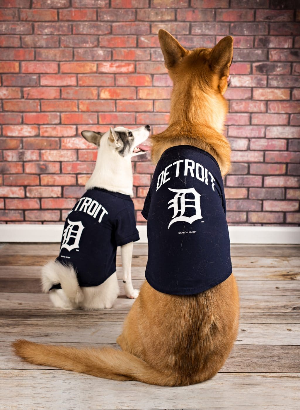Detroit Tigers Dog Apparel